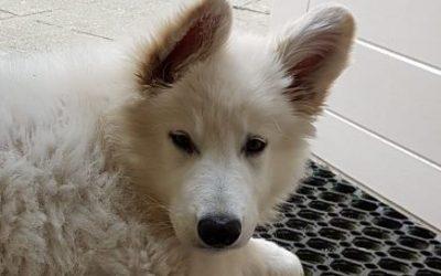 Jouw pup vaccineren of titeren?
