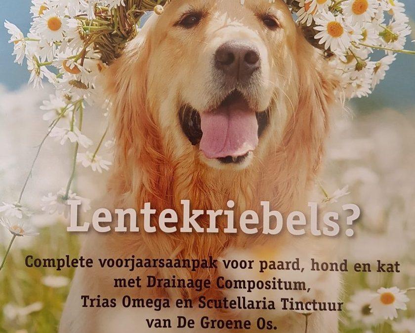 Detox jij jouw hond?